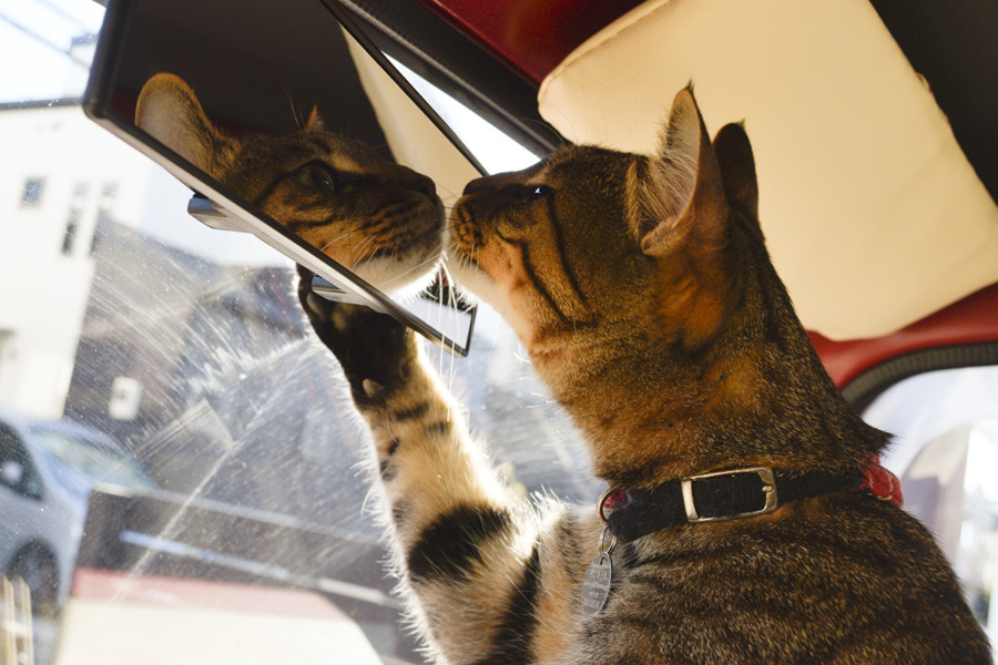 鏡をのぞく虎ノ介