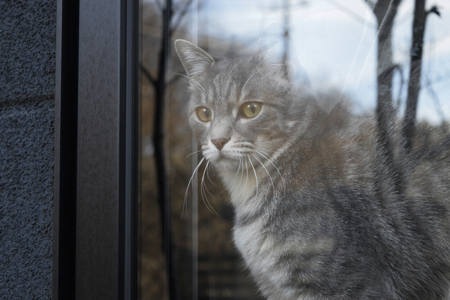 外で遊ぶ虎ノ介を家の中から見つめる春太