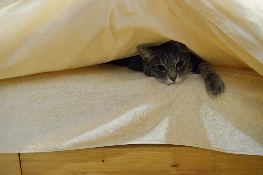 ベッドから半分顔をだす退屈している春太
