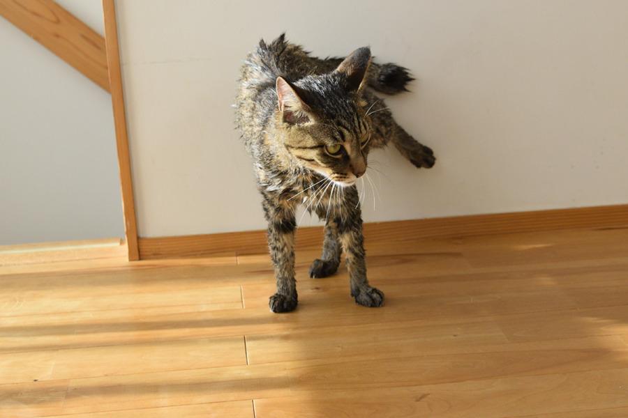 洗濯後の虎ノ介