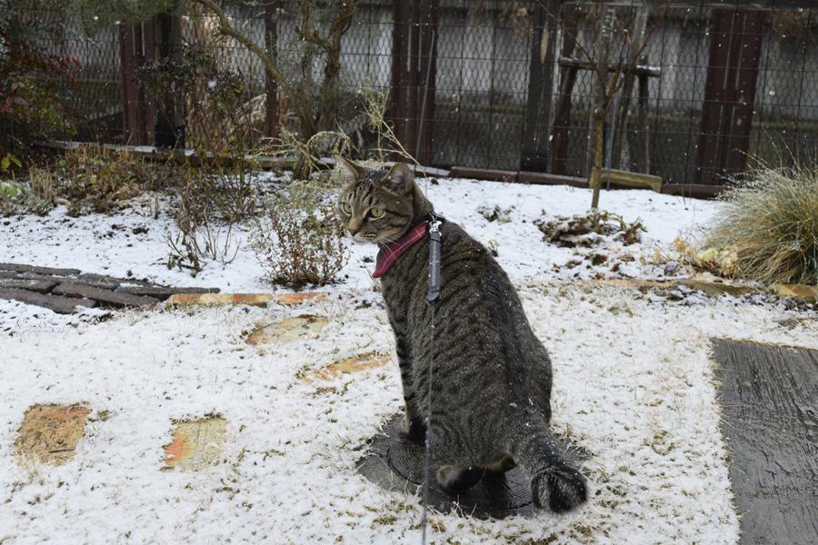 雪の中散歩にでる虎ノ介