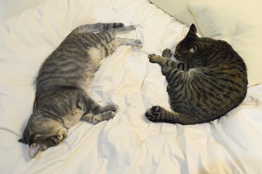 布団で眠る虎ノ介と春太