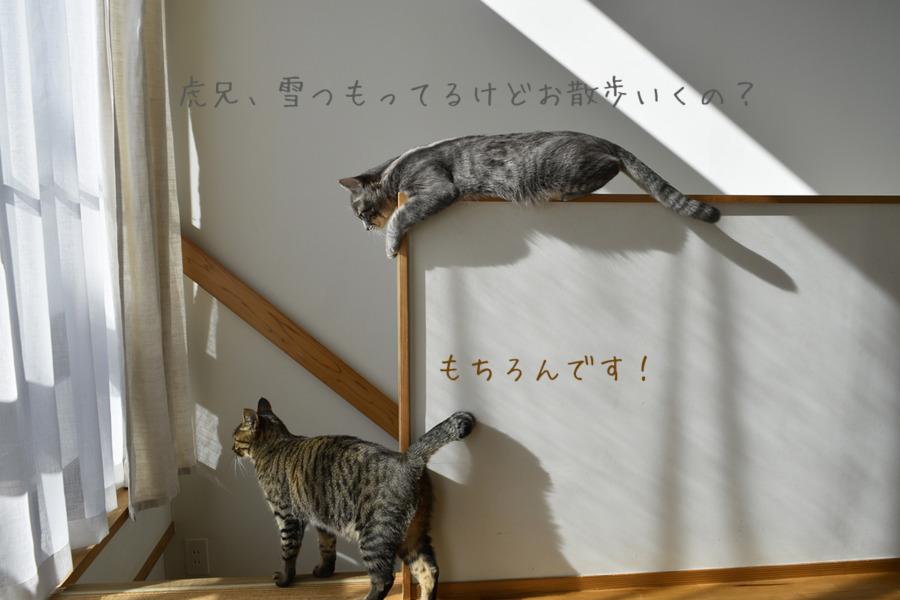 階段の手すりの上から虎ノ介を見る春太