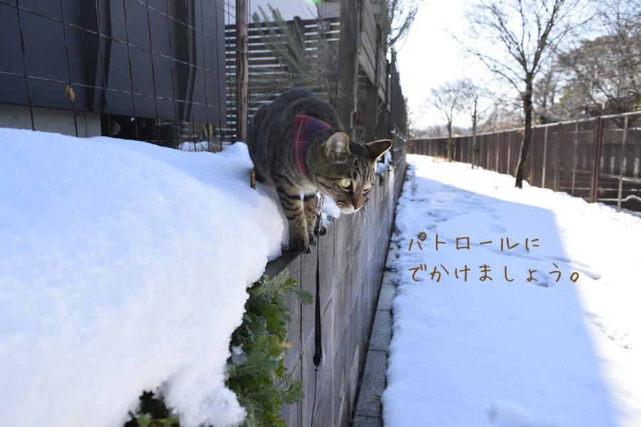 雪の中パトロールにでかける虎ノ介