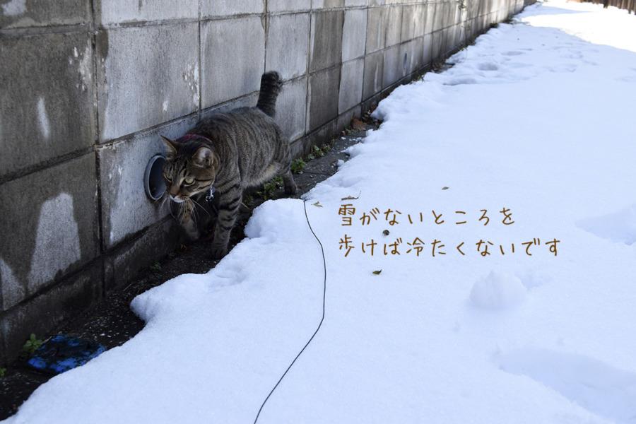 雪がないところを歩く虎ノ介
