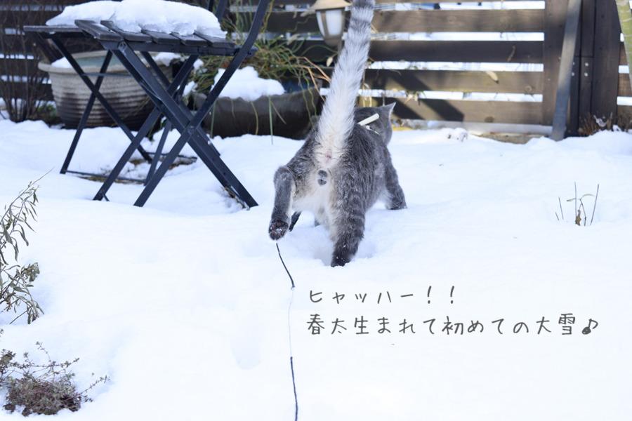 雪の上ではしゃぐ春太