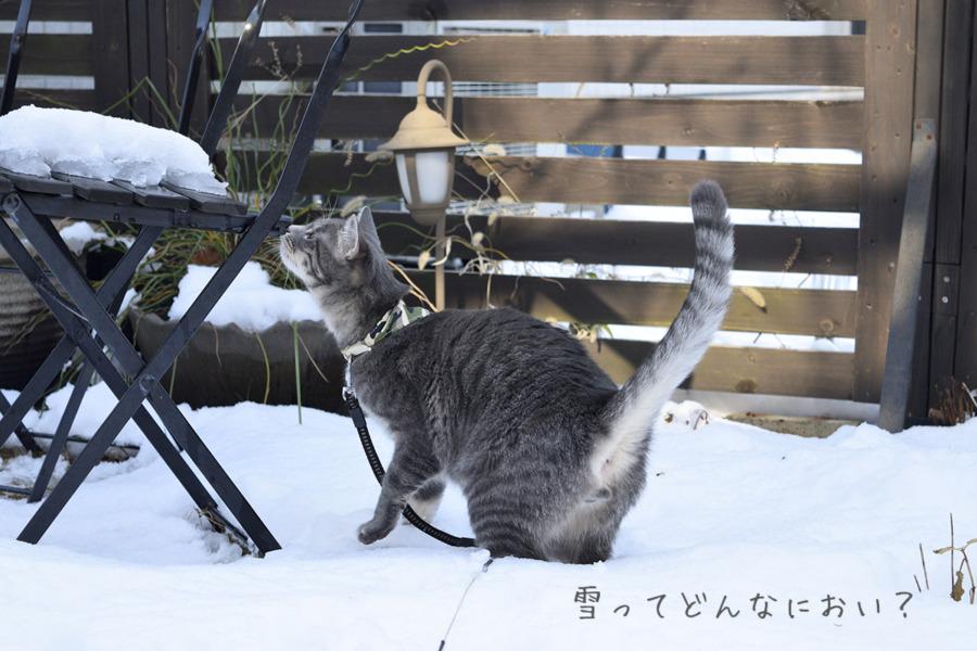 雪の匂いを嗅ぐ春太