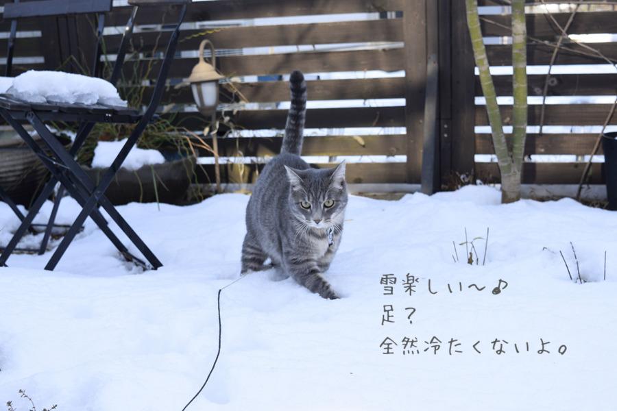 雪の上を歩く春太