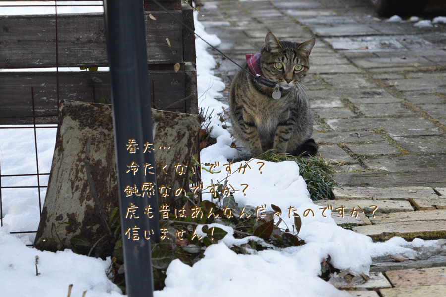 雪の上を歩く春太を見る虎ノ介