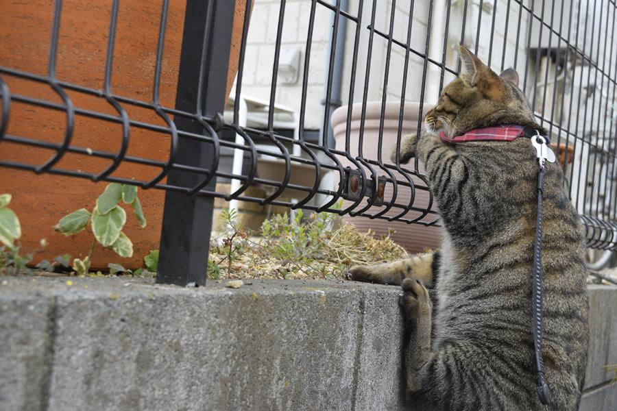 鳥を捕まえようとしてよその家の塀にのぼる虎ノ介