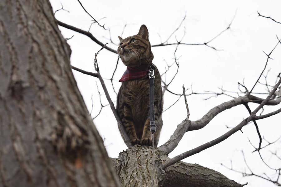 鳥を捕まえようと木に登る虎ノ介