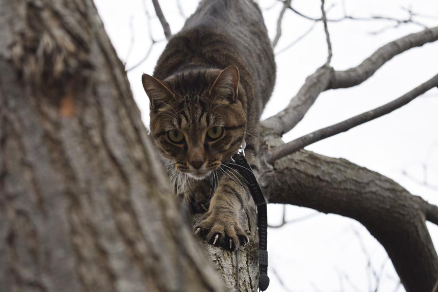 木から自力で降りる虎ノ介