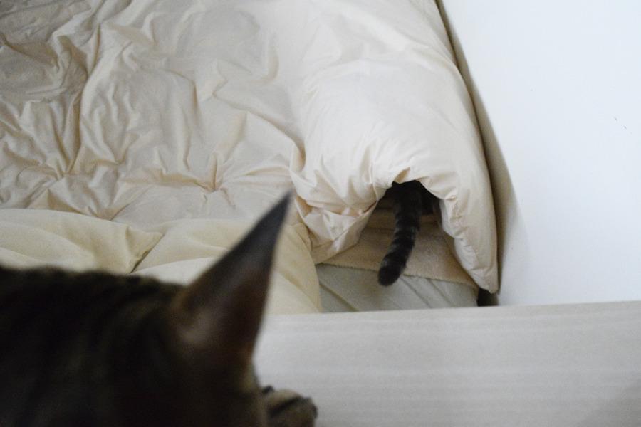 虎ノ介が入っていた布団の穴に入りこむ春太