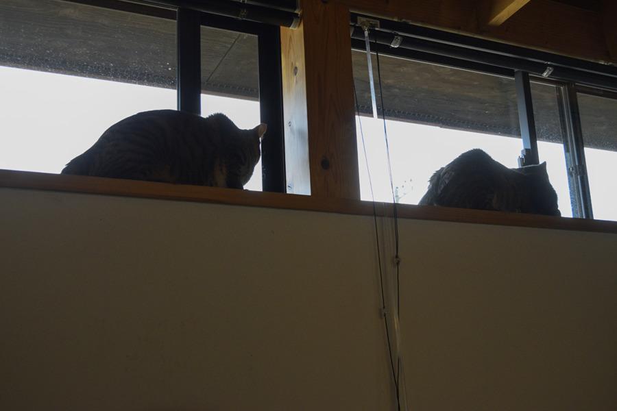 窓から鳥を眺める虎ノ介と春太