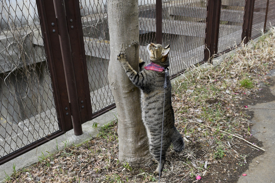 木の枝をおいかける虎ノ介