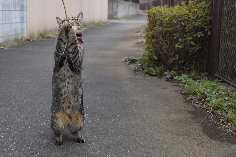 木の枝を捕まえた虎ノ介