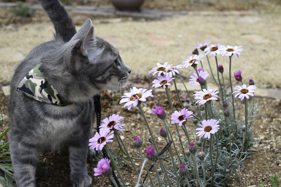 庭で散歩をする春太