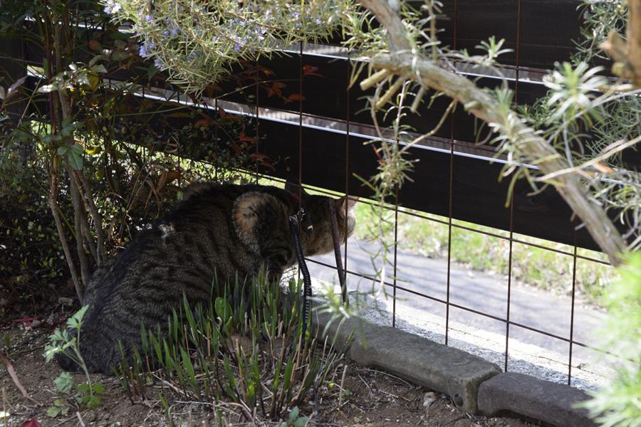 庭から鳥を観察する虎ノ介
