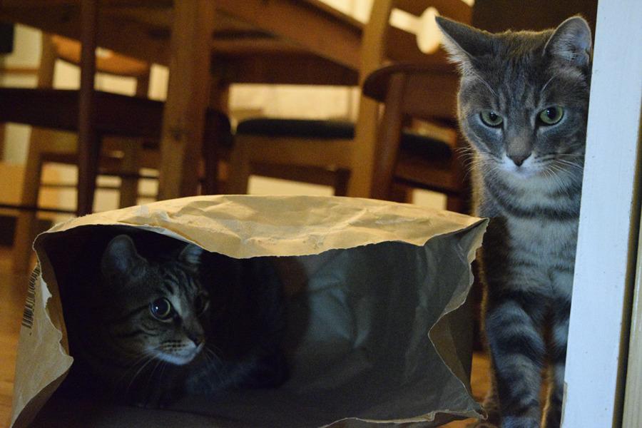 袋の中にはいる虎ノ介