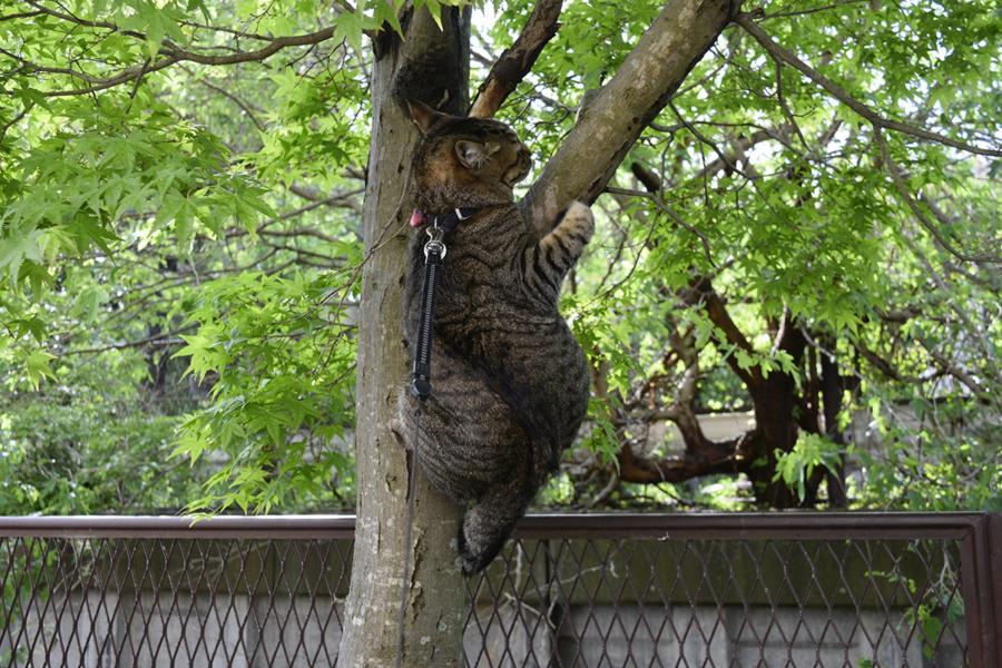 木につかまる虎ノ介