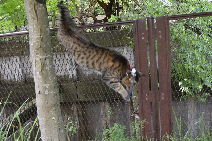 木から飛び降りる虎ノ介