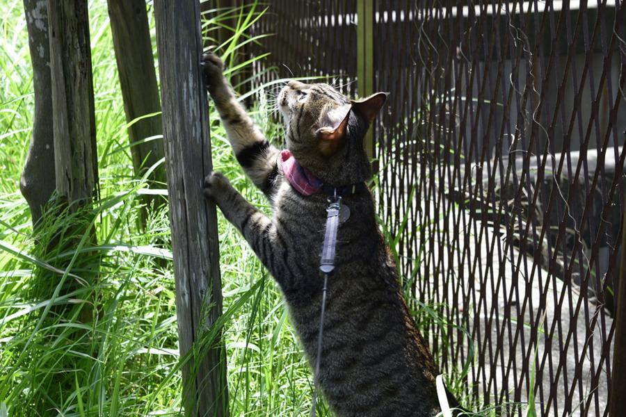 鳥を見上げる虎ノ介