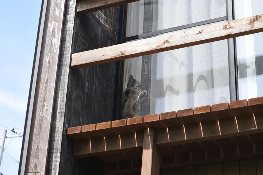 窓と網戸の間に挟まろうとする春太