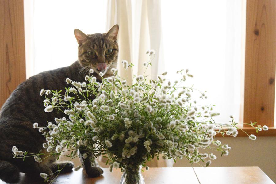 人間が活けた花をチェックする虎ノ介