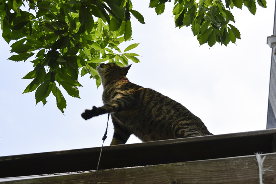 小屋の上で鳥を捕ろうとする虎ノ介