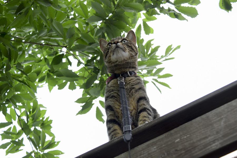 小屋の上で鳥をしとめそこねた虎ノ介