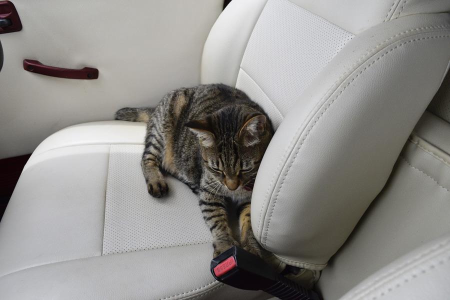 車の中で休憩する虎ノ介