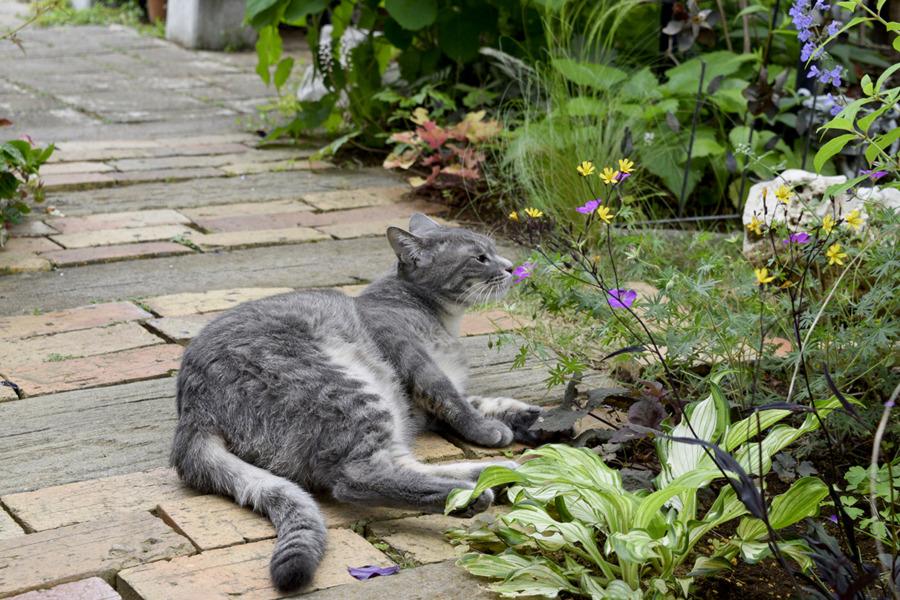 脱走して庭で遊ぶ春太