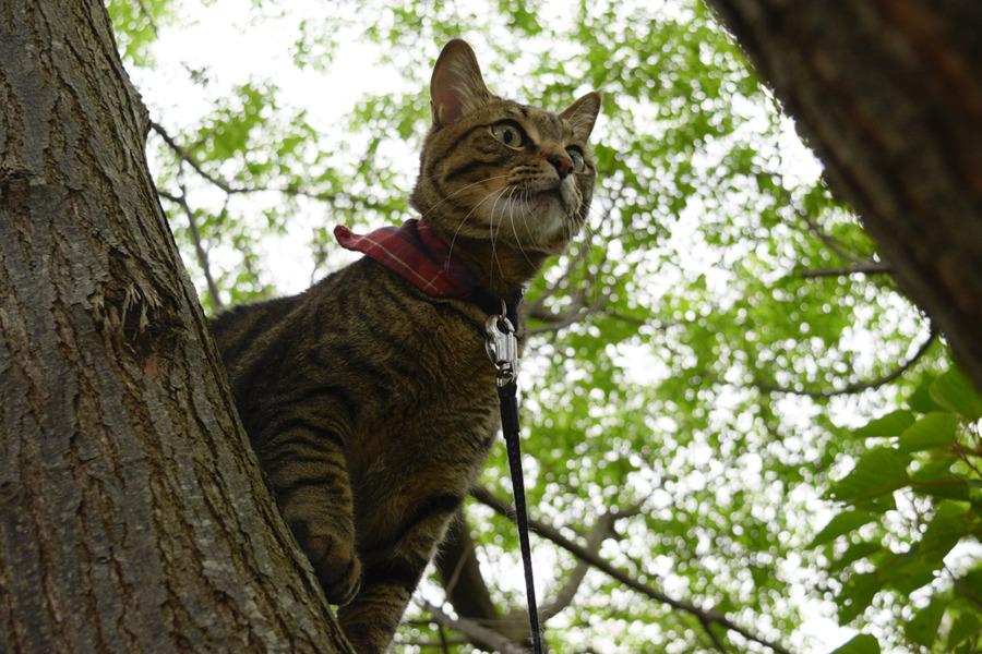 木の上で犬や人を警戒する虎ノ介