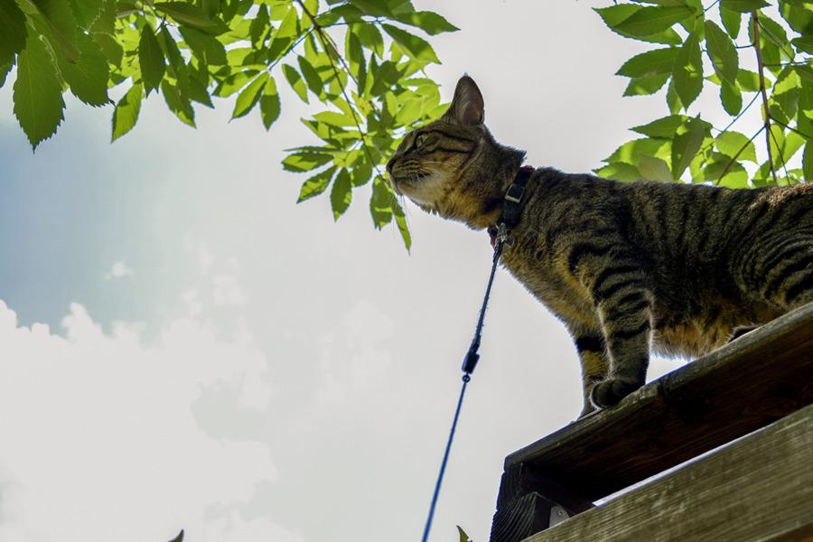 小屋から鳥を捕まえようとする虎ノ介