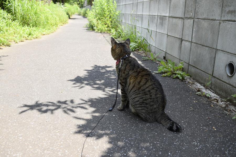 暑くて日陰からでたくない虎ノ介