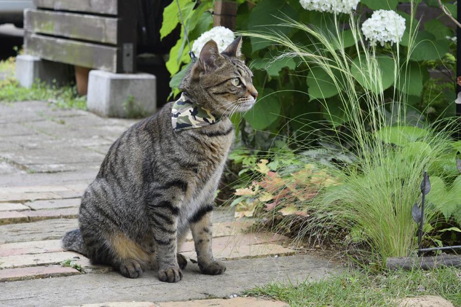 春太が庭にいることに気づいた虎ノ介