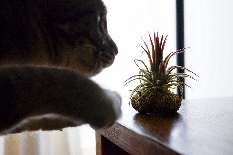 植物をイタズラする春太