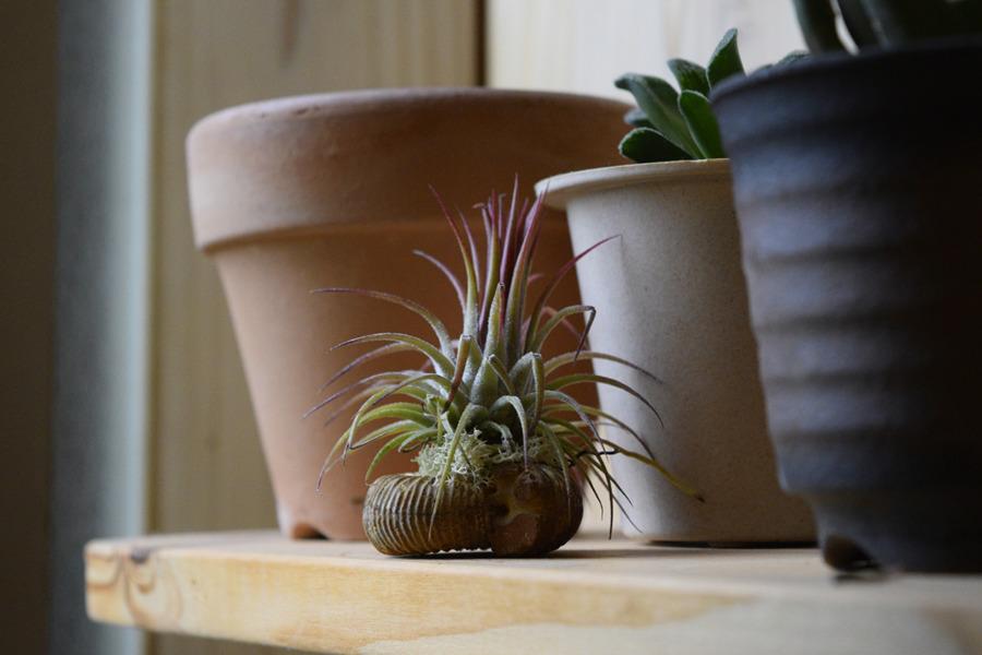 春太にイタズラされないように高い場所におかれた植物