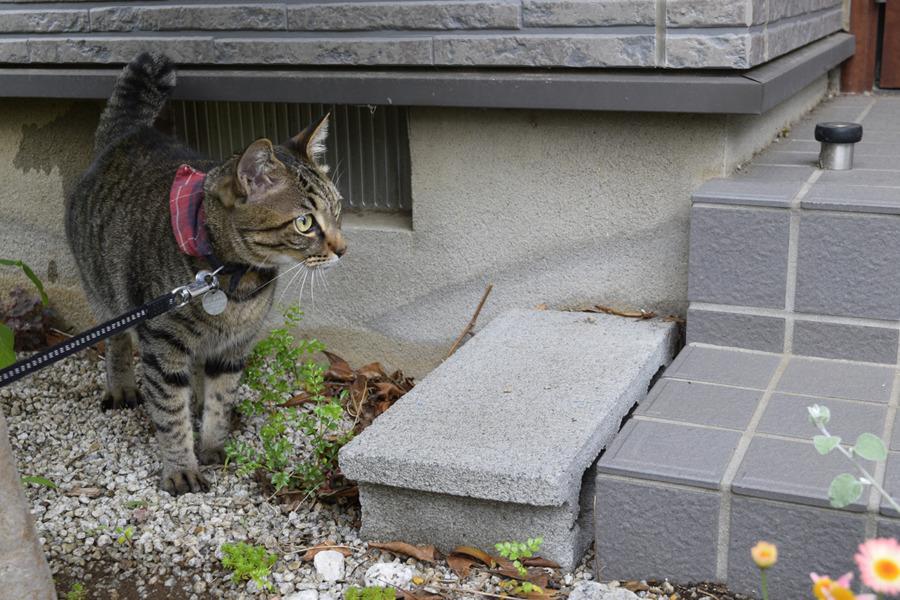 ご近所の家に遊びにきた虎ノ介