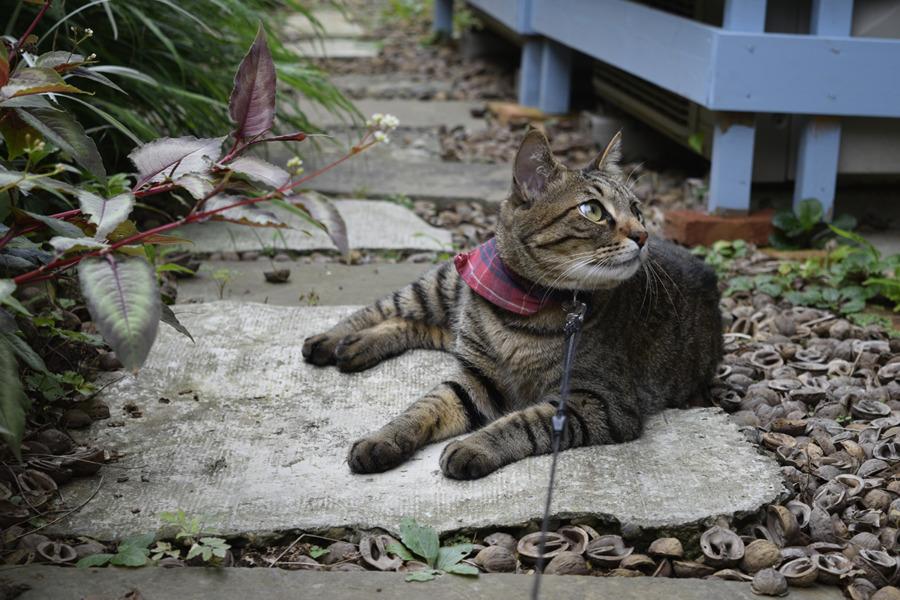 庭で涼む虎ノ介
