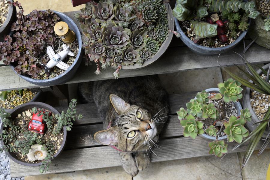 植木鉢をチェックする虎ノ介