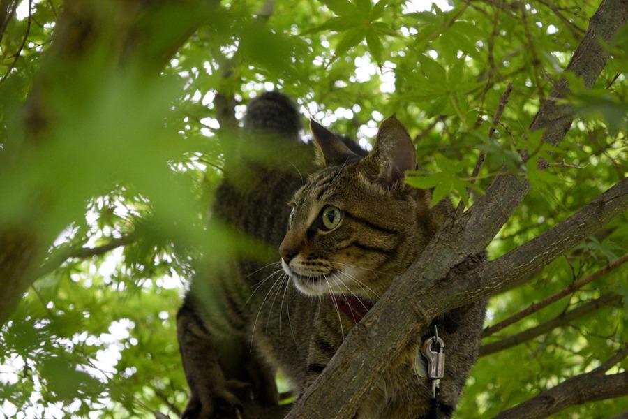 木登りした虎ノ介