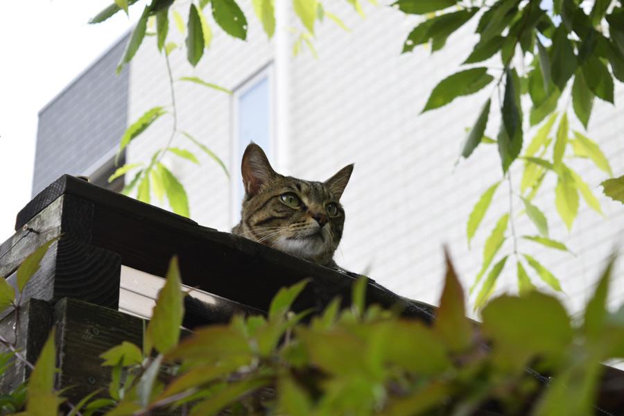 小屋の上で鳥を見つめる虎ノ介