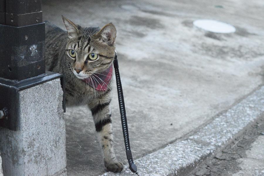 散歩にでかけた虎ノ介