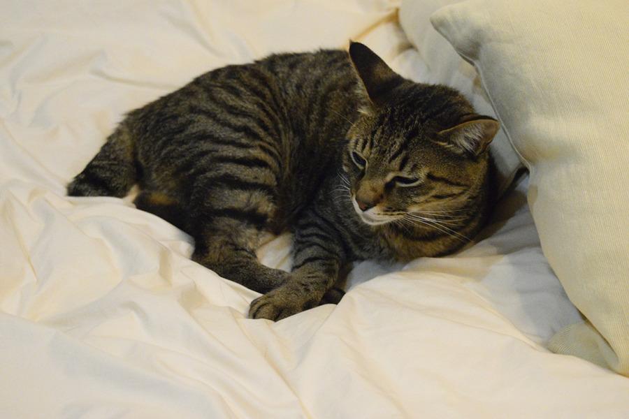 病院で疲れてベッドに横たわる虎ノ介