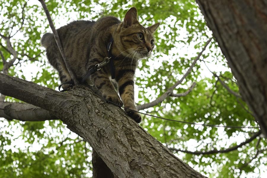 鳥をおいかけて木の上を移動する虎ノ介