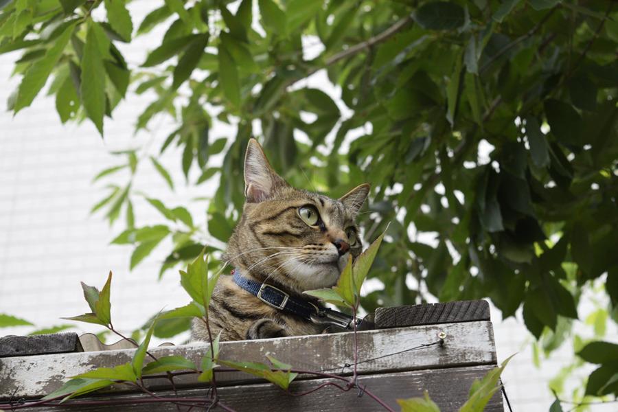 小屋の上で鳥をみる虎ノ介