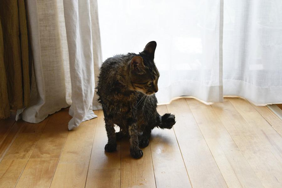 洗濯された虎ノ介