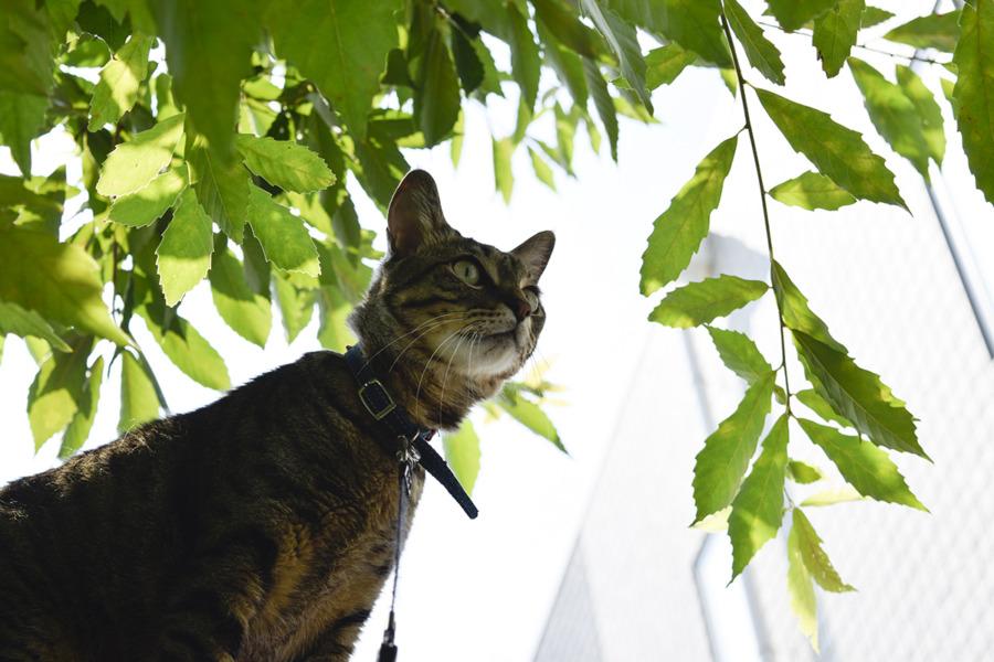 鳥を捕まえようと小屋に上がったのに見失った虎ノ介
