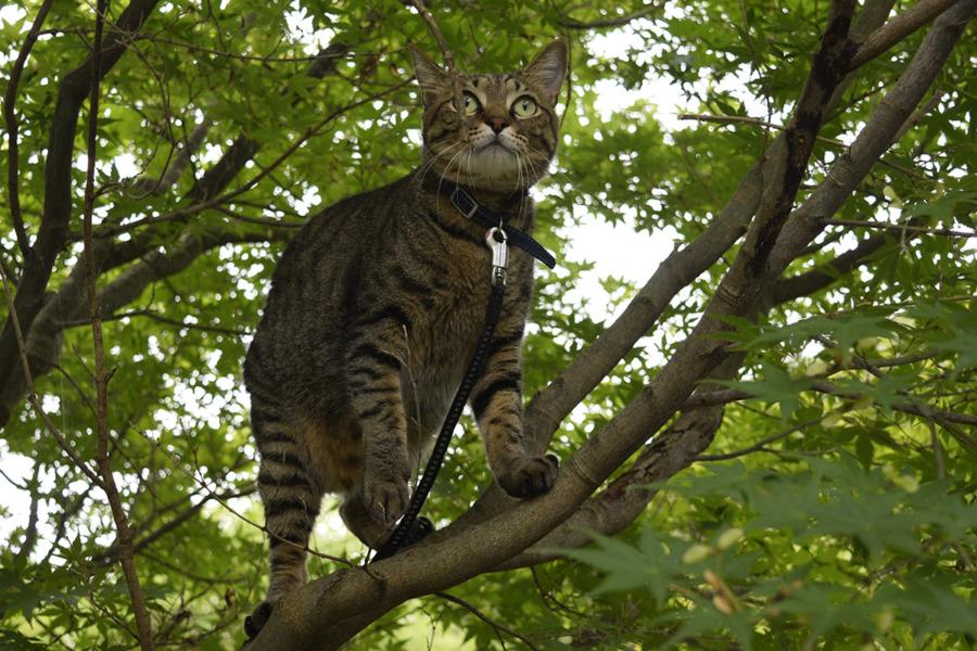 木の上に何かの気配を感じた虎ノ介